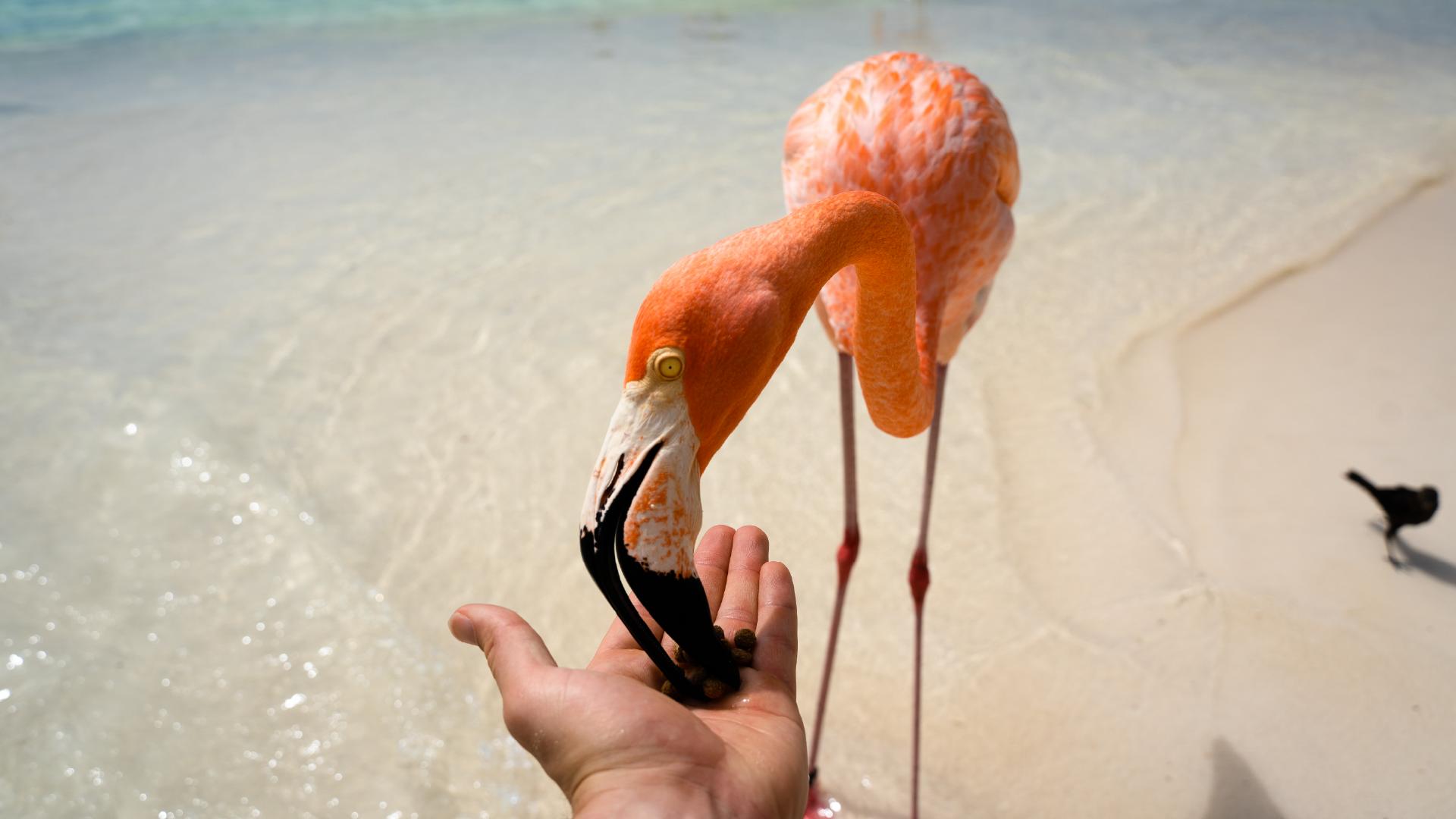 15 Ways to Explore Aruba