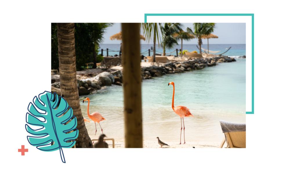 Flamingos on a beach in Aruba